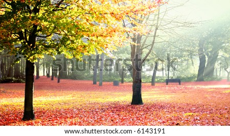 Sunny autumn park showing it's lovely changing color of nature in a misty morning.