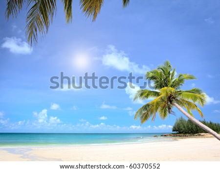 Sunny beach and palm tree - stock photo