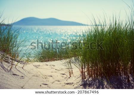 sunny beach with sand dunes, tall grass and blue sky - stock photo