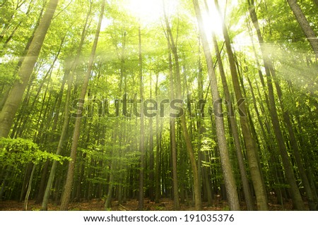 Sunlight trees stock photos illustrations and vector art