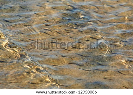 Sunny day at shallow sea. School of young fish. - stock photo