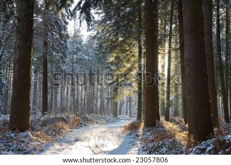 Sunny day in a snowy winter forest - stock photo