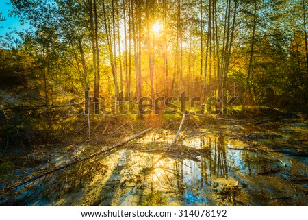 Sunny Day In Autumn Sunny Forest Woods and Wild Bog. Nature Woods, Sunlight Background. Instant Toned Image - stock photo