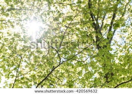 Sunny day in the woods perfectly as backround - stock photo
