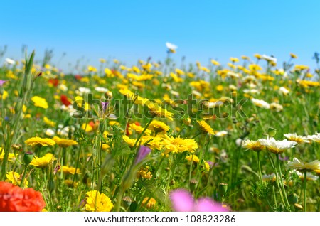 Sunny field of yellow and white wild flowers - stock photo