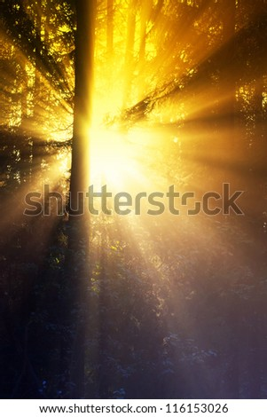 Sunny forest early in the morning at sunrise - stock photo