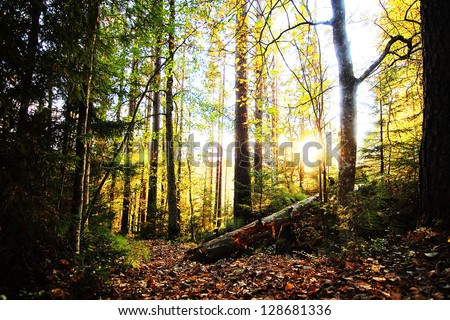 Sunny forrest - stock photo