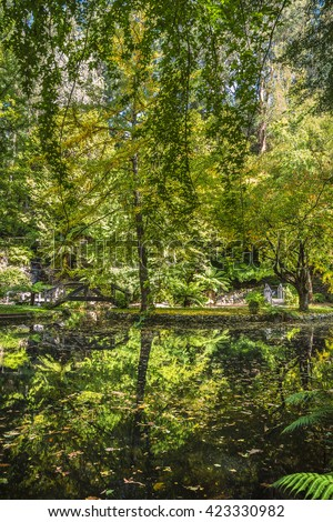 sunny garden reflections autumn fern tree gully Mt Dandenong