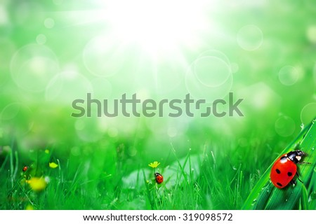 sunny green field with ladybugs and butterfly - stock photo