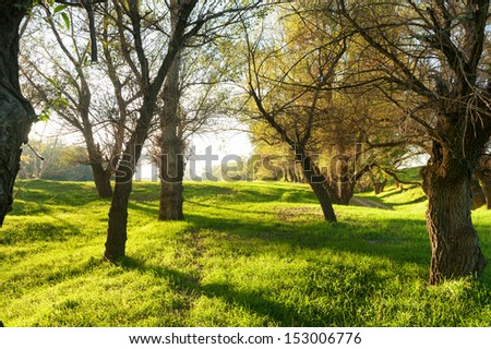 Sunny green forest with shadow - stock photo