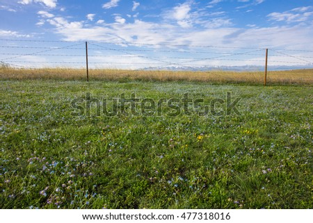 Sunny green grass background