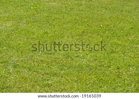 sunny green grass field in perspective - stock photo