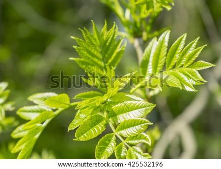sunny illuminated fresh green tree sprouts at springtime - stock photo