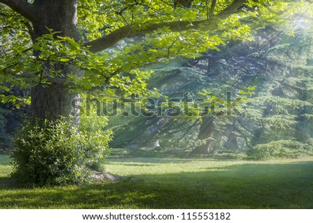 Sunny meadow in a mystical forest - stock photo
