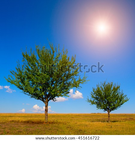 sunny meadow. two green trees on the blue sky background,  with small clouds and sun in the morning. - stock photo