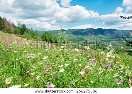 Sunny meadow with wild flowers - sunny day - stock photo