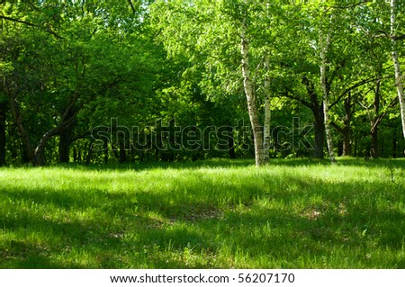 Sunny morning at summer forest - stock photo