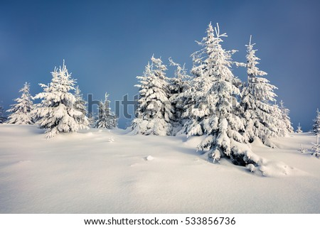 Sunny morning scene in the mountain forest. Bright winter landscape in the snowy wood, Happy New Year celebration concept. Artistic style post processed photo.