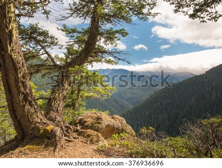Sunny mountain vista, from Hurricane Ridge Road, in Olympic National Park, near Port Angeles, Washington. - stock photo