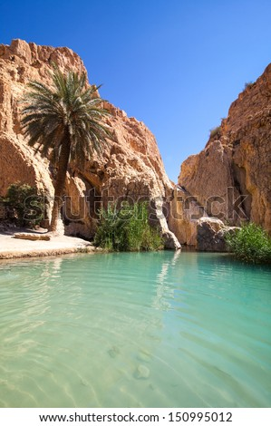 Sunny oasis in desert - stock photo