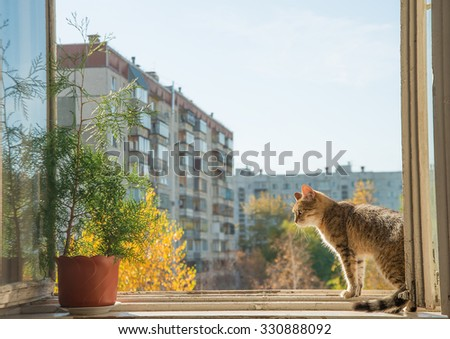 sunny room. Cat sit on sunset Open window.yellow light against high house and blue sky with white clouds. Kitty sit on wooden windowsill and look down. Autumn season. Indoor plant - stock photo