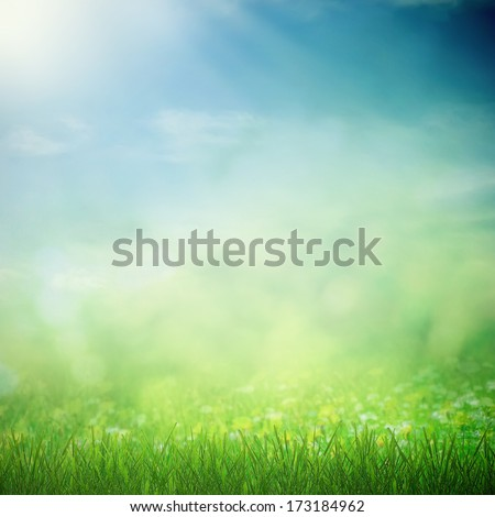Sunny sky with spring field with growing flowers and grass - stock photo