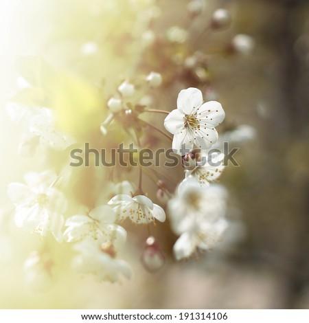 sunny spring flowers at sunrise  - stock photo
