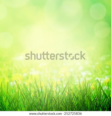 Sunny spring meadow in morning sunlight - stock photo