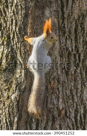 Sunny squirrel on the tree - stock photo