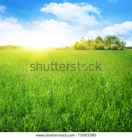 Sunny summer day. - stock photo