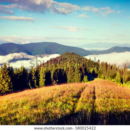Sunny summer morning in the Carpathian mountains. Picturesque outdoor scene on the mountain valley in June, Ukraine, Tatariv village location, Europe. Retro style filtered.