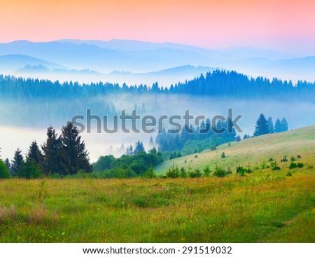 Sunny summer morning in the foggy Carpathian mountains. Borzhava ridge, Transcarpathian, Ukraine, Europe. - stock photo