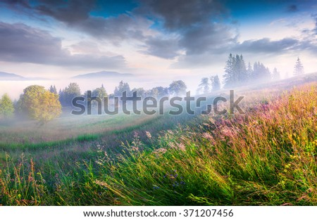 Sunny summer morning in the foggy mountain village. Fresh grass on a meadow glowing first sunlight at sunrise. Kvasy location, Transcarpathian, Ukraine, Europe. - stock photo
