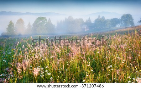 Sunny summer morning in the foggy mountain village. Fresh grass on a meadow glowing first sunlight at sunrise. Kvasy location, Transcarpathians, Ukraine, Europe. - stock photo