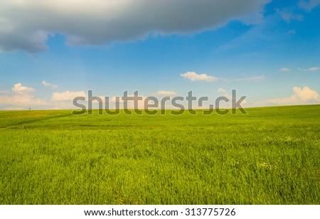 Sunny Summertime Grass Land  - stock photo