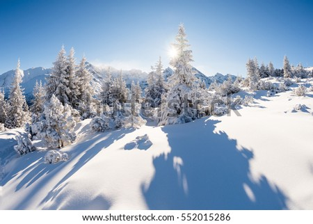 Sunny winter in the mountain forest