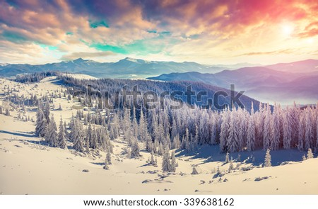 Sunny winter landscape in the Carpathian mountains. Pazharska glade, Ukraine, Europe. Instagram toning. - stock photo