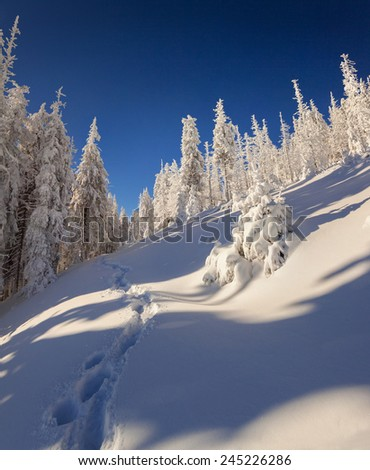 Sunny winter landscape in the mountain forest - stock photo