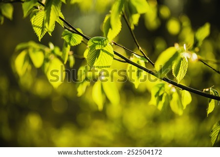 Sunny young green spring  leaves, natural eco background - stock photo