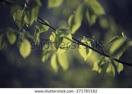 Sunny young green spring  leaves, natural eco vintage art background - stock photo