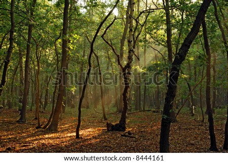 Sunray shining through the trees. - stock photo