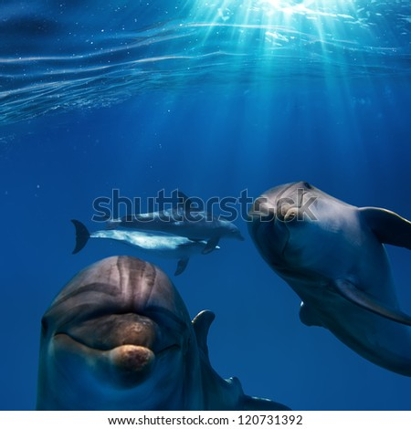 sunrays and deep blue water surface with two funny nice dolphins underwater - stock photo