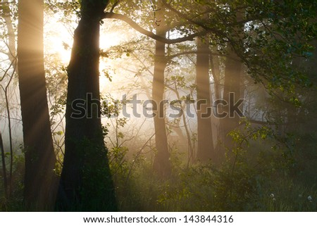 sunrays at morning - stock photo