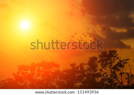 Sunrise and flying birds - stock photo