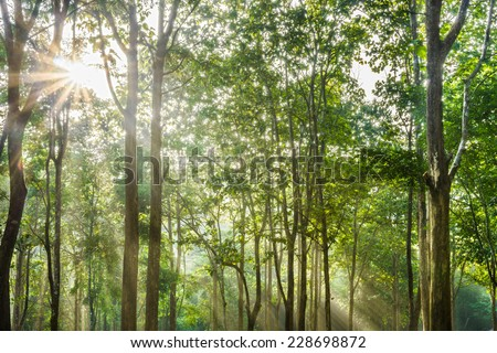 Sunrise at a tropical forest in Northern Thailand - stock photo