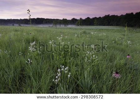 Sunrise at Churchill Prairie Nature Preserve, where coneflower, rattlesnake master, wild quinine and compass plant grow among the native prairie grasses.  DuPage County, Illinois.  - stock photo