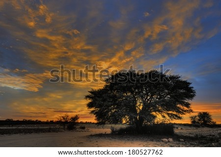Sunrise at Cubitje Quap, a waterhole along the Nossob, a fossil river in the Kalahari desert, Kgalagadi transfrontier park, South africa - stock photo