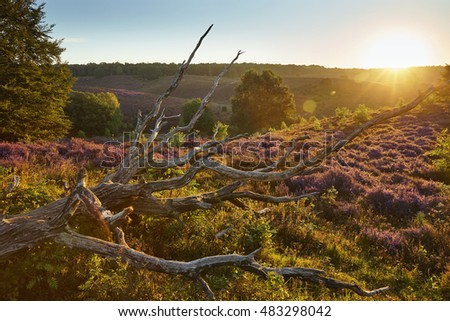 Sunrise at National park 'De Veluwe', section 'Posbank', near the city of 'Arnhem', province of 'Gelderland', the Netherlands