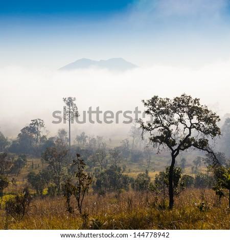 Sunrise at Tung Salang Luang National Park, Thailand - stock photo