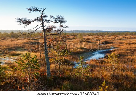 sunrise autumn swamp - stock photo